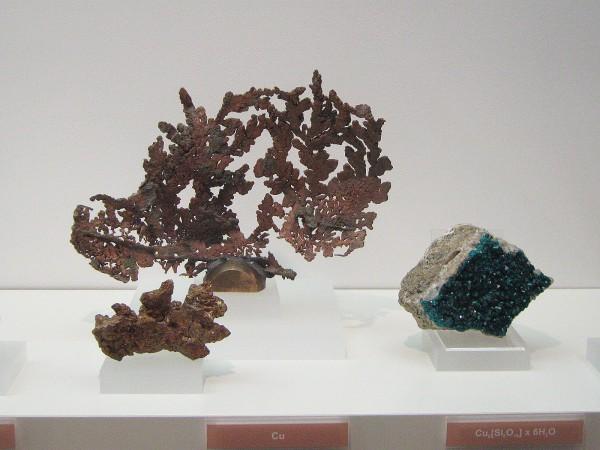 Экспонаты геологической выставки в Музее природы © Алёна Груя