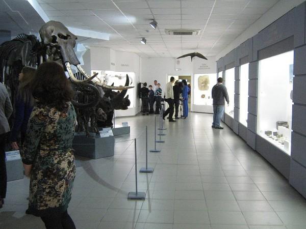 Зал музея природы, в котором выставлена палеонтологическая коллекция © Алёна Груя