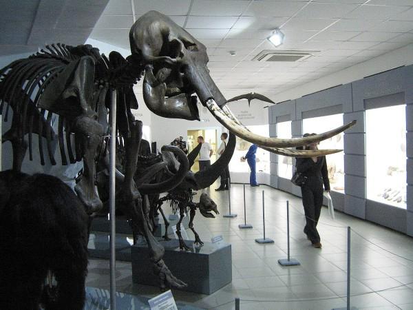 Палеонтологическая коллекция Музея природы © Алёна Груя