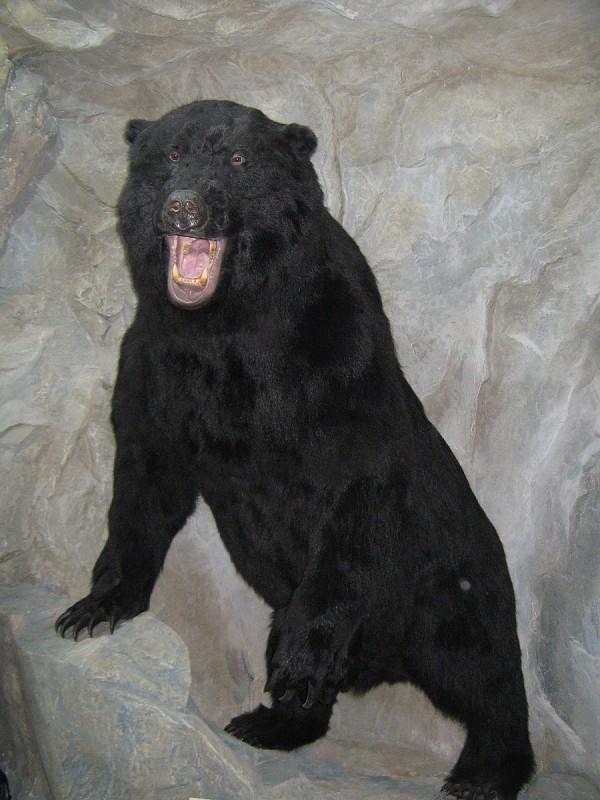 Пещерный медведь, получивший имя Сан Саныч © Алёна Груя