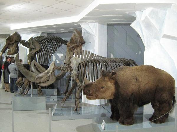 Экспонаты палеонтологической коллекции музея © Алёна Груя