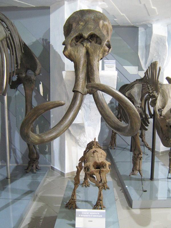 Скелеты – экспонаты палеонтологической выставки © Алёна Груя