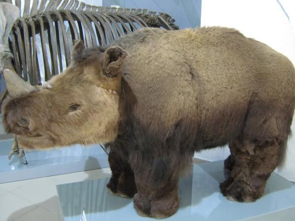 Реконструкция шерстистого носорога © Алёна Груя