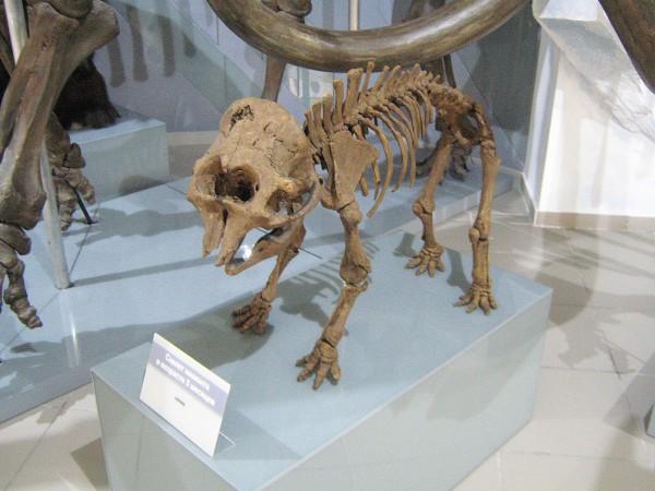 Скелет мамонта в возрасте 5 месяцев © Алёна Груя