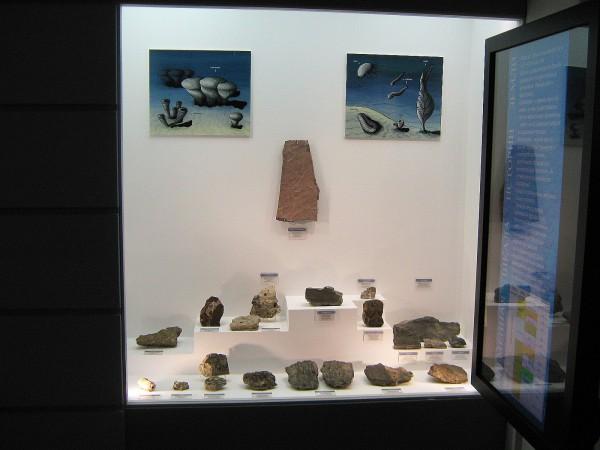 Палеонтологическая коллекция в Музее природы © Алёна Груя