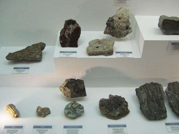 Окаменелости – экспонаты палеонтологической выставки © Алёна Груя