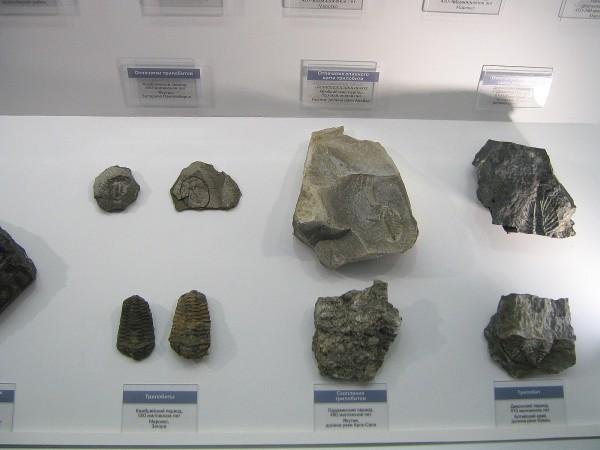 Часть палеонтологической экспозиции в Музее природы © Алёна Груя