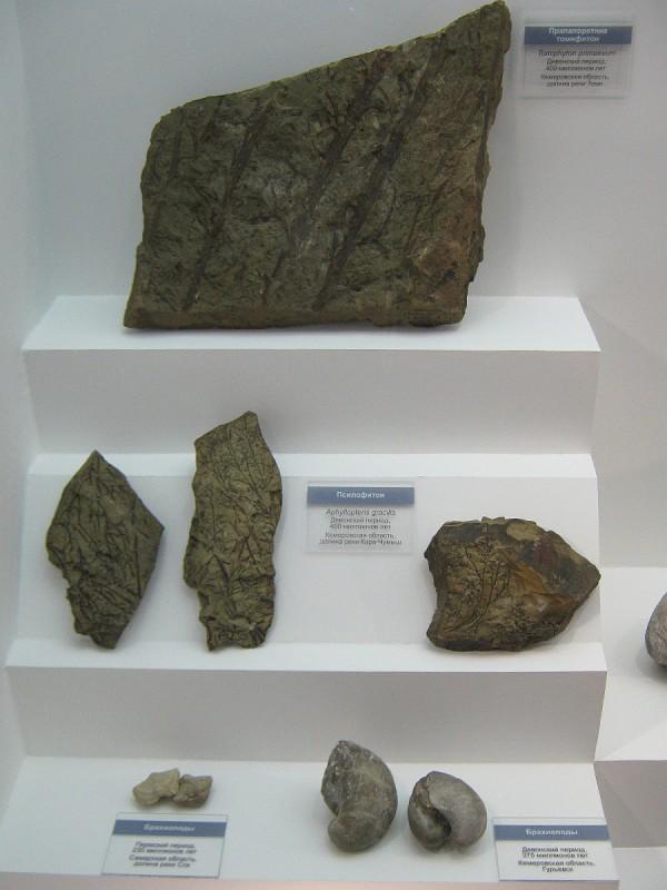 Окаменелости, выставленные в Музее природы © Алёна Груя