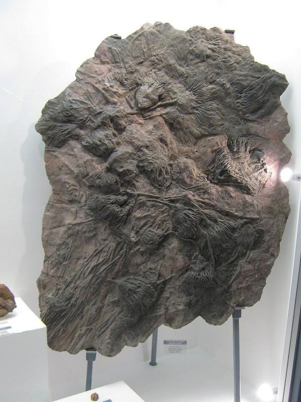 Один из экспонатов палеонтологической выставки © Алёна Груя