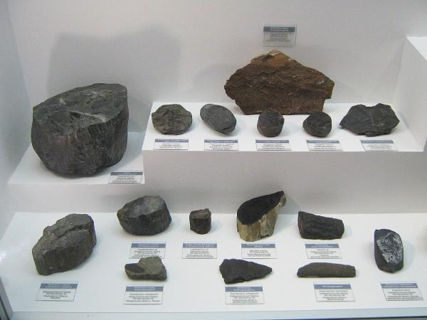 Экспонаты палеонтологической выставки – древние окаменелости © Алёна Груя
