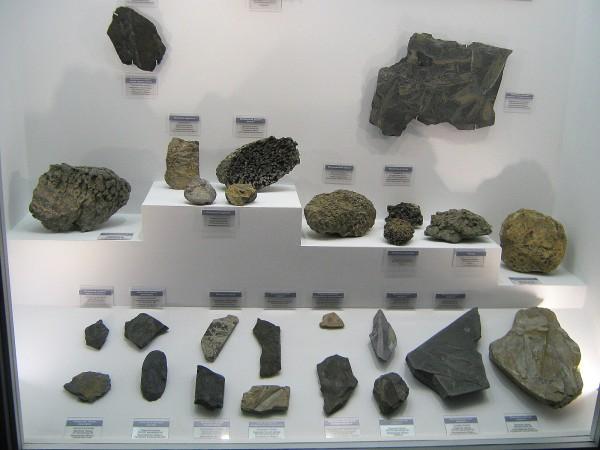 Часть экспозиции палеонтологической выставки © Алёна Груя
