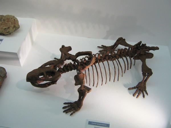 Скелет дицинодона – экспонат выставки © Алёна Груя