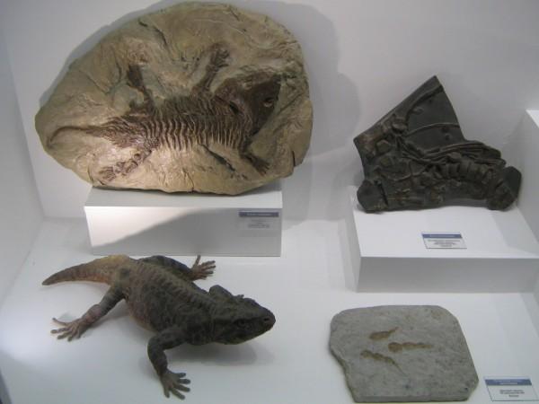 Экспонаты Музея природы на палеонтологической выставке © Алёна Груя