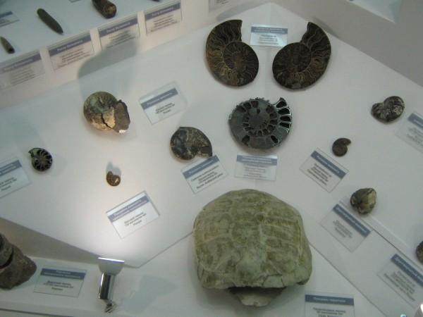 Аммониты и другие экспонаты палеонтологической выставки © Алёна Груя