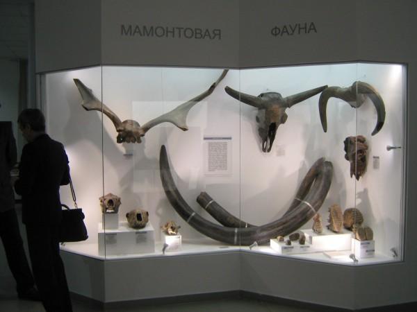 Экспозиция «Мамонтовая фауна» в Музее природы © Алёна Груя