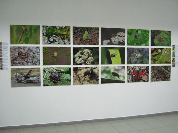 Выставка «Животный мир Новосибирской области» © Алёна Груя