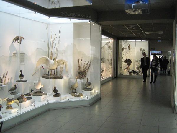 Зал Музея природы, в котором находится экспозиция «Птицы НСО» © Алёна Груя