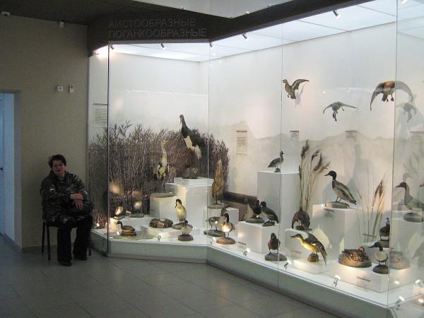Один из залов Музея природы, в котором находятся птицы © Алёна Груя