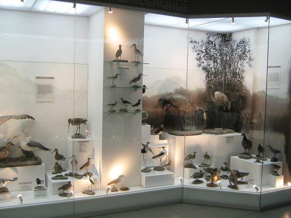 Часть экспозиции «Птицы НСО» © Алёна Груя