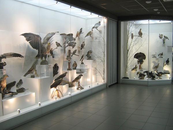 Выставка в Музее природы, посвященная птицам НСО © Алёна Груя