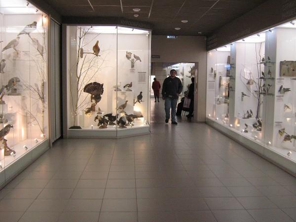 Экспозиция «Птицы НСО» © Алёна Груя
