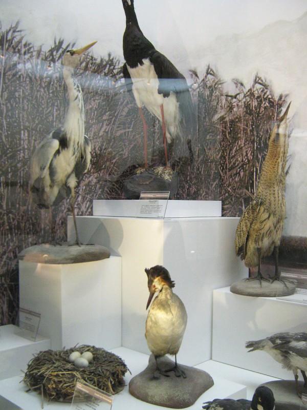 Птицы – экспонаты выставки в Музее природы © Алёна Груя