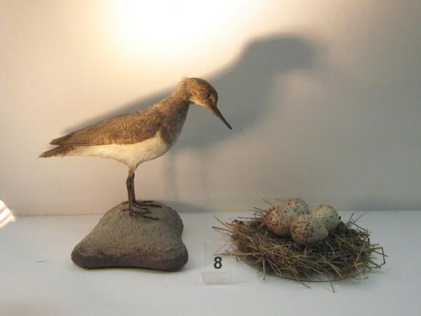 Один из экспонатов выставки, посвященной птицам © Алёна Груя