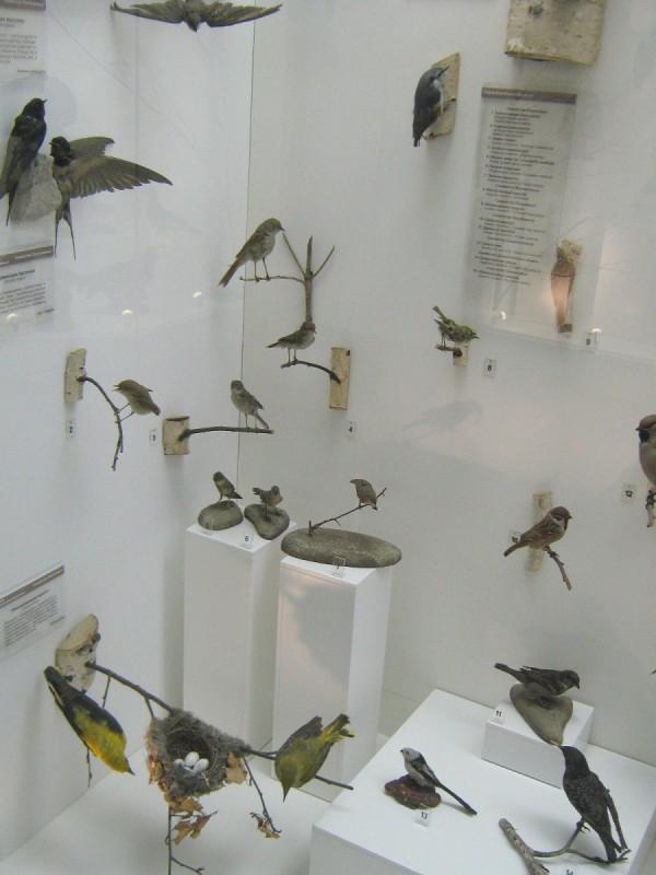 Ласточки и другие птицы на выставке «Птицы НСО» © Алёна Груя