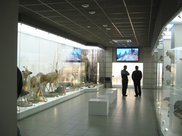 Зал Музея природы с экспозицией «Млекопитающие НСО» © Алёна Груя