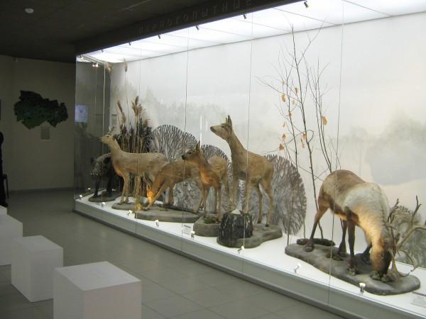 Экспозиция «Млекопитающие НСО» © Алёна Груя