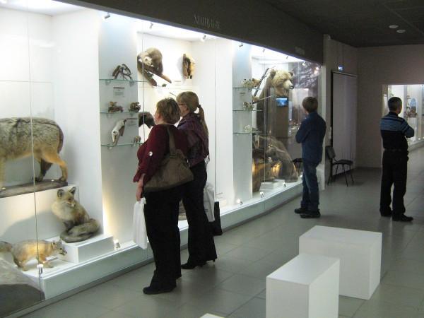 Помещение Музея природы, в котором находится выставка «Млекопитающие НСО» © Алёна Груя
