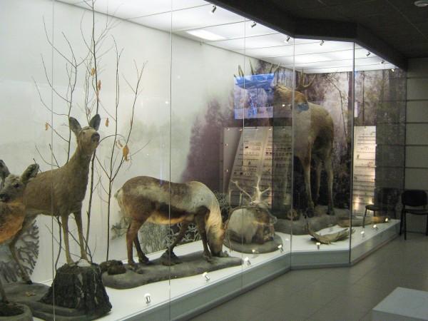 Зал Музея природы, в котором выставлены животные НСО© Алёна Груя
