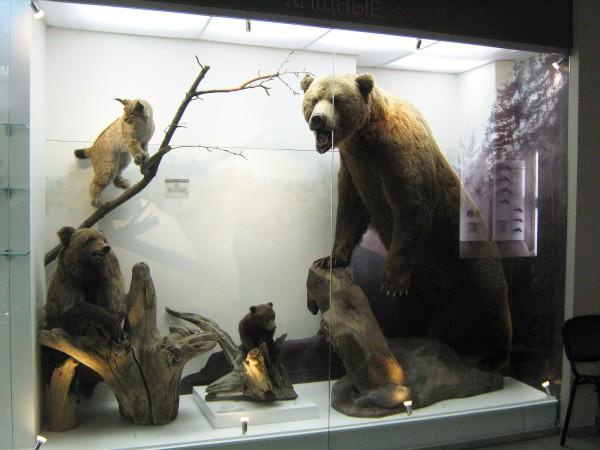 Экспозиция «Млекопитающие НСО» в Музее природы © Алёна Груя