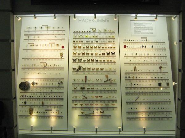 Выставка насекомых в Музее природы © Алёна Груя