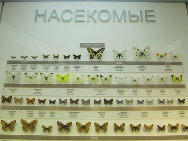 Насекомые – экспонаты Музея природы © Алёна Груя