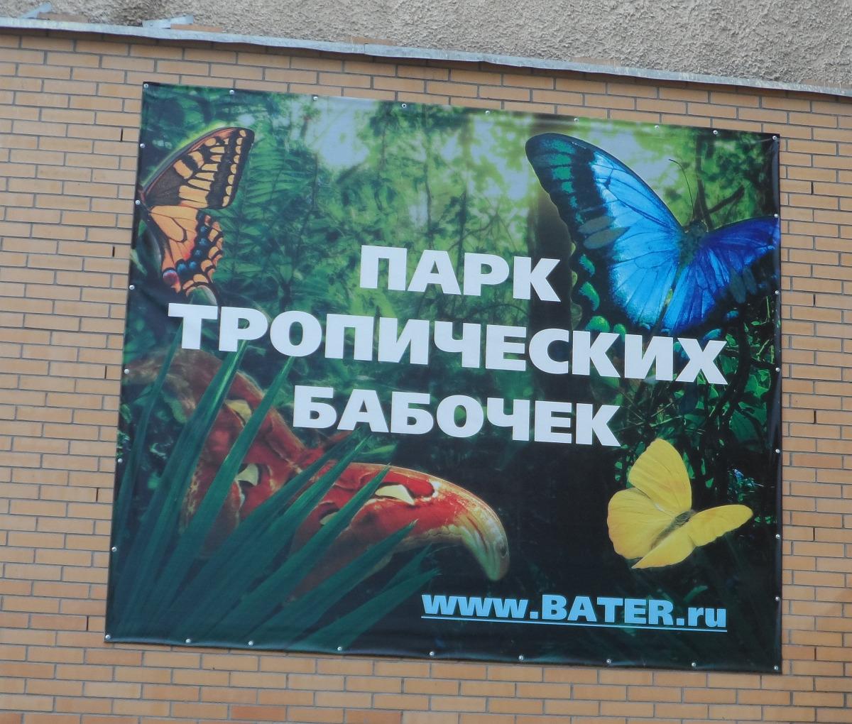 кто предложил знакомому коллекционировать бабочек