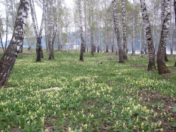 Вдали от домиков расположены поляны с неизвестными мне цветами. © Юлия Полякова