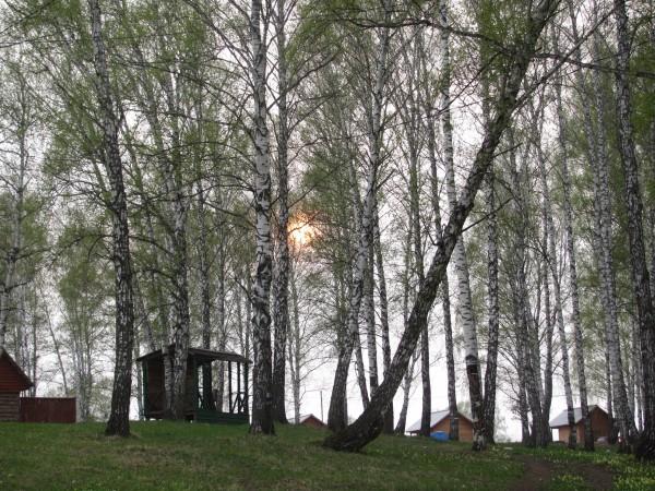 Закат среди берез. © Юлия Полякова