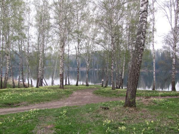 За деревьями видна речка, которая ведет к водопаду. © Юлия Полякова