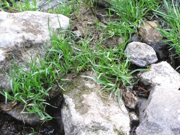 Повсюду пробивается весенняя трава. © Юлия Полякова