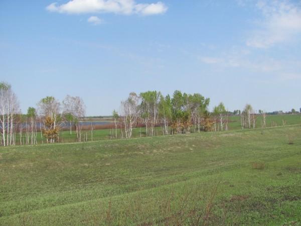 И снова живописные поля. © Юлия Полякова